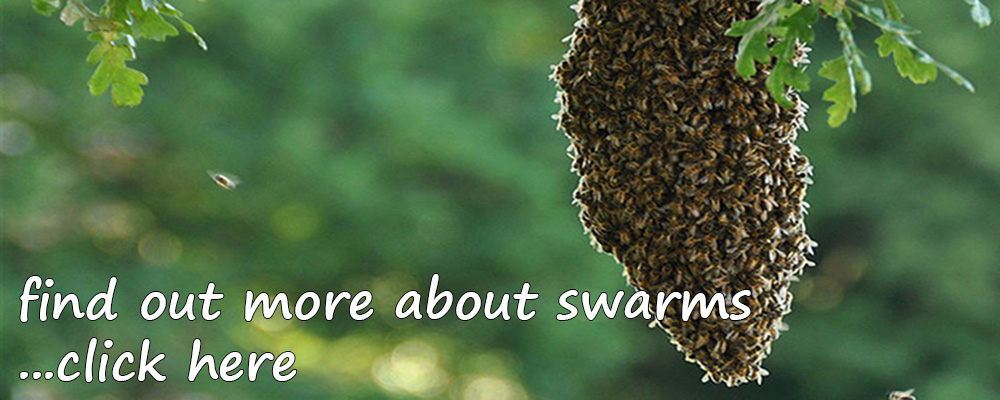 Manchester and District Beekeepers Association - Bee Swarm Management