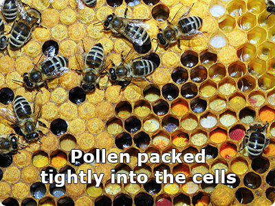 Pollen Packed into Hive Cells